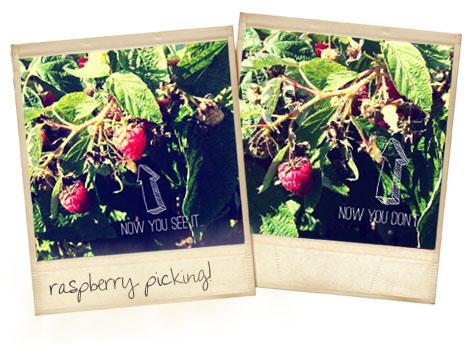 Raspberrypicking